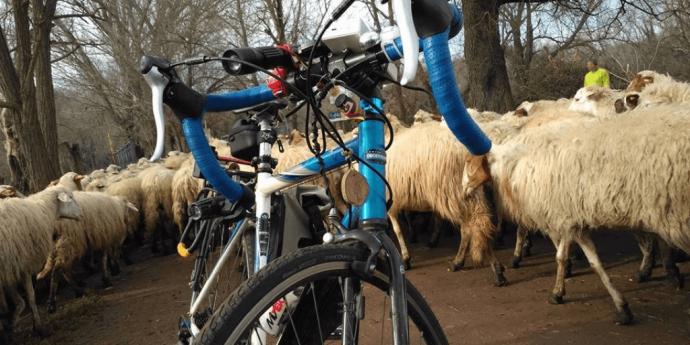 luci bici e pecore