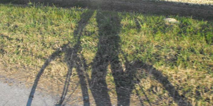 ombra del ciclista sull'erba